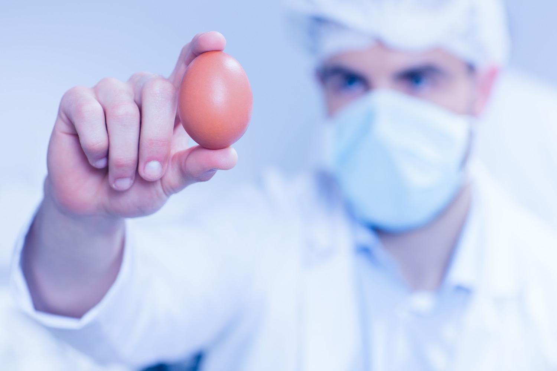 ביצים - מידע חדש