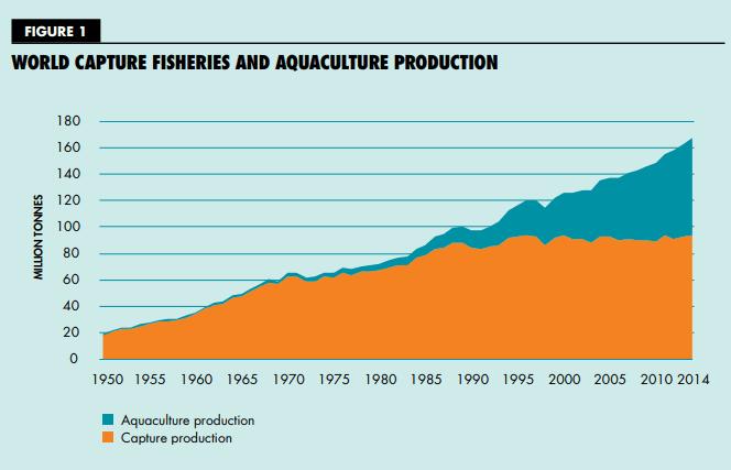 תרשים נתוני צריכת דגים בעולם