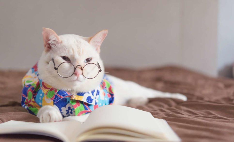 ספר מומלץ חתול
